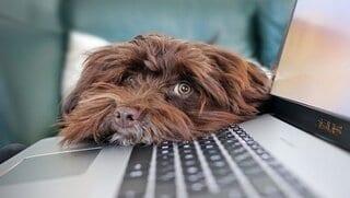 beste laptop voor basisgebruik